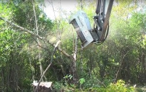 Massive Tree Cutter