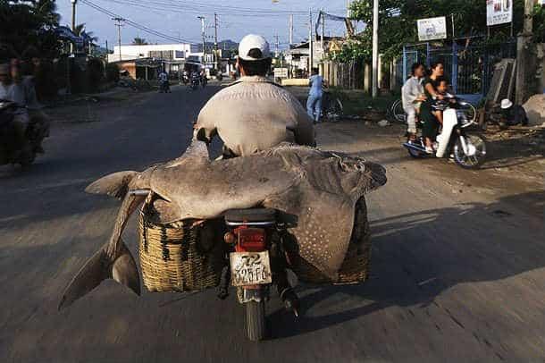 asian motorbike