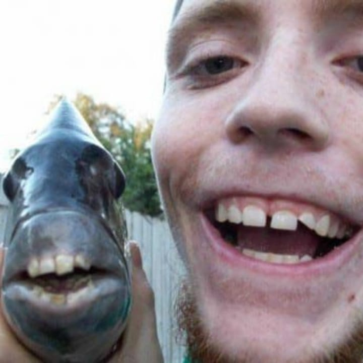 a fish and a man that have identical sets of teeth, funny fishing pictures.
